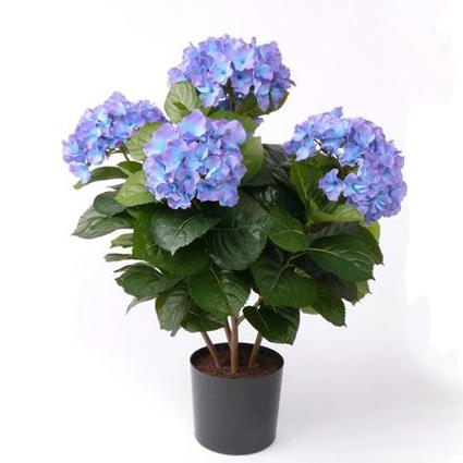 Купить для дома цветы в горшках